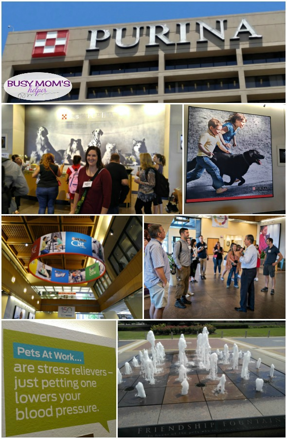 A fun day exploring Purina offices #MeetPurina #ad