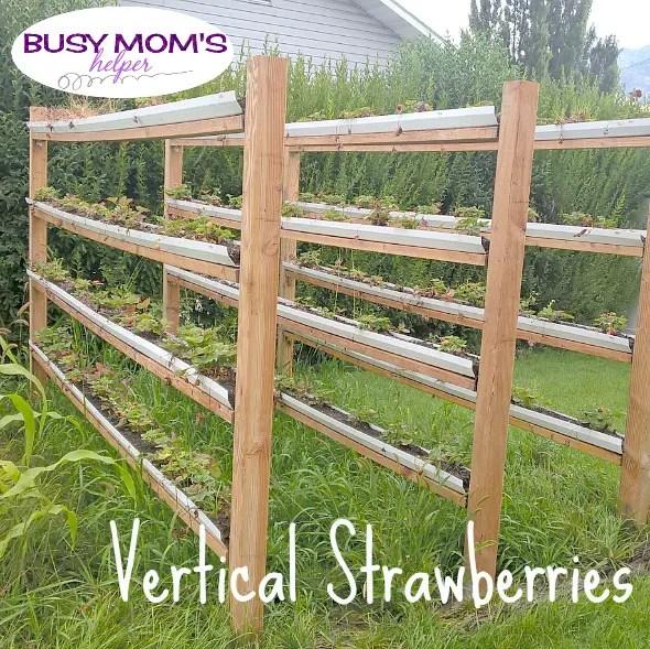 Vertical Strawberries by Nikki Christiansen for Busy Mom's Helper