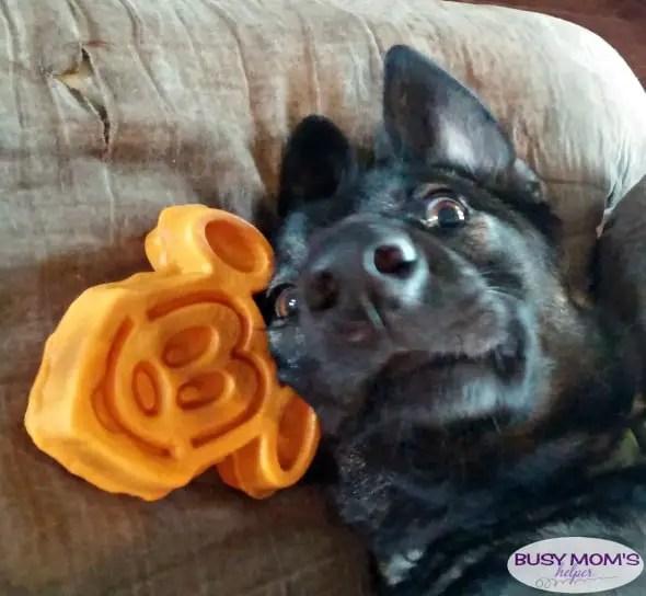 Dogs are More #AD #DogsAreMore #IC