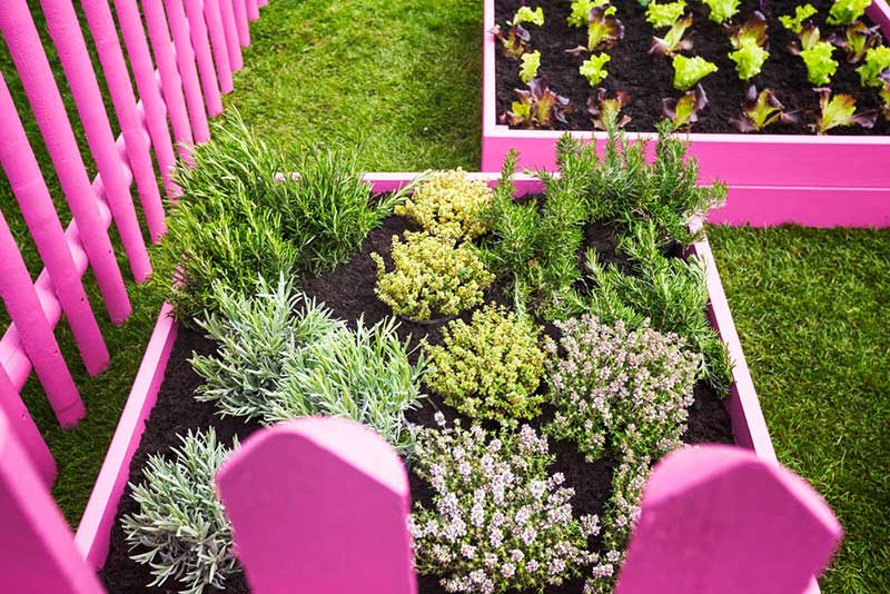 Pink Garden Boxes