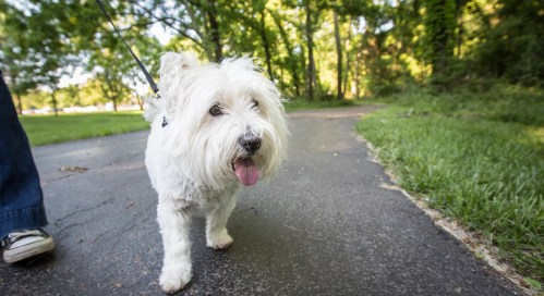 Busy Paws Pet Sitting Services in Kansas City - Dog Walking