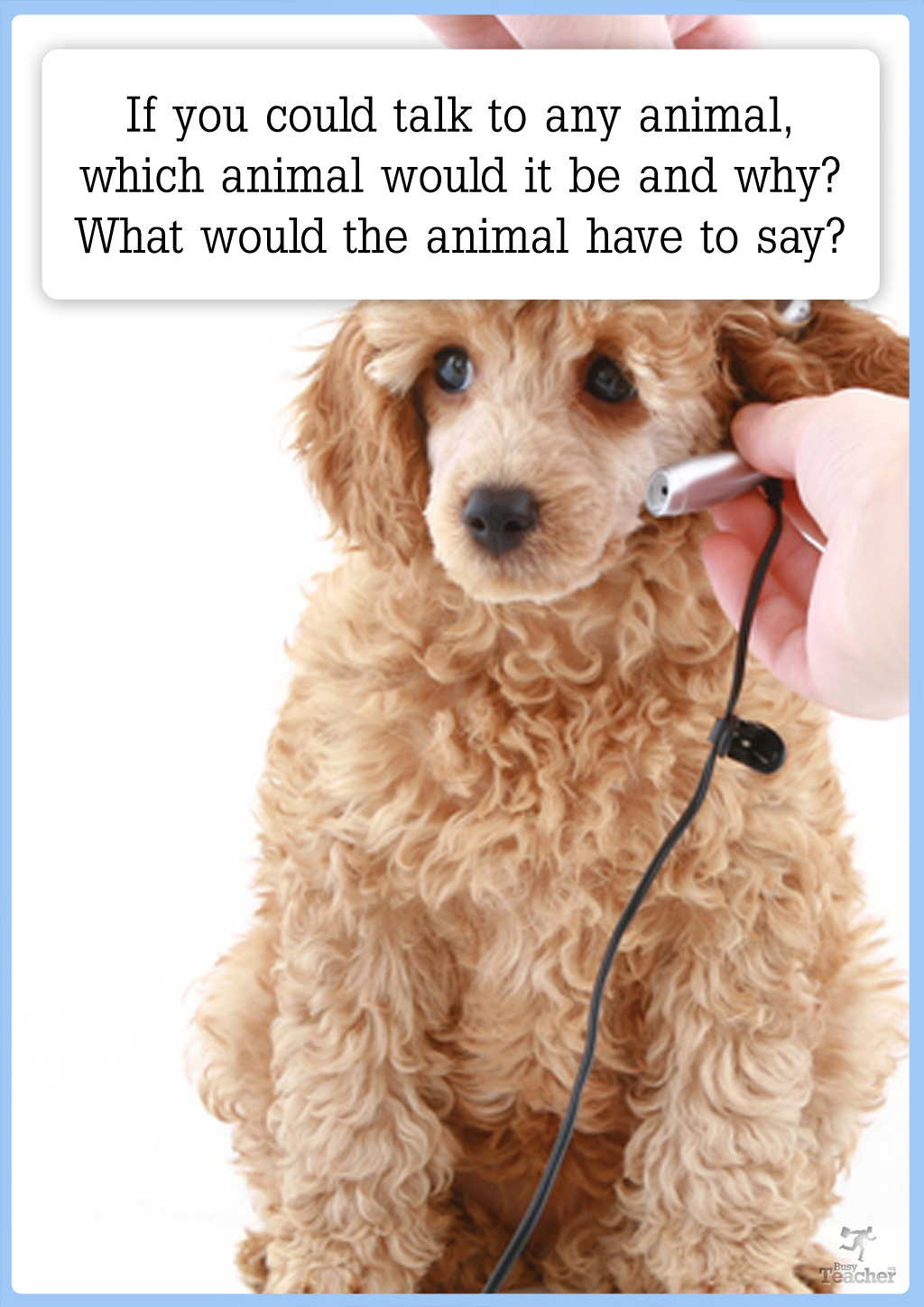 If You Could Talk To Any Animal Creative Writing Prompt