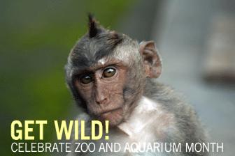 Get Wild Celebrate Zoo And Aquarium Month
