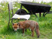 Fox & barrow!