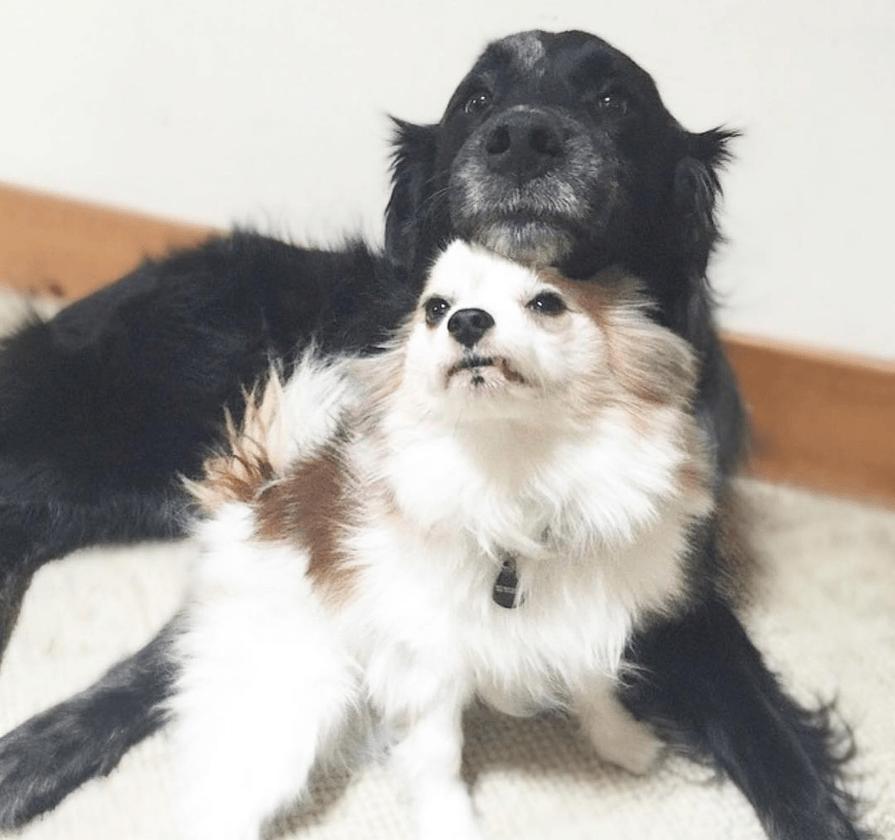 dog-lessons-8