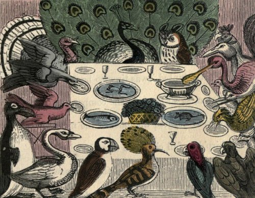 this_tea_party_is_for_the_birds