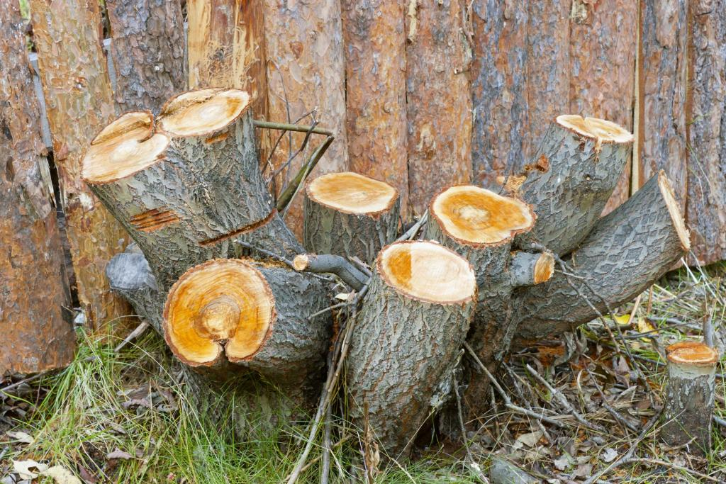 Butler County Landscaping - Stump Grinding 1