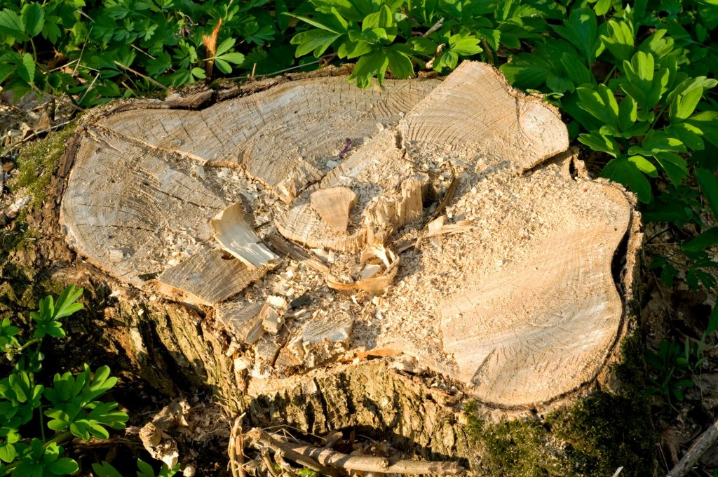Butler County Landscaping - Stump Grinding 2