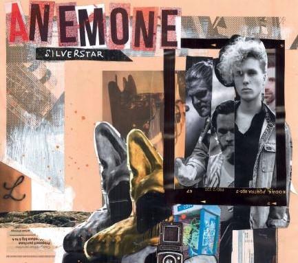Anemone – Silver Star