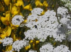 Garden bugs 38 38