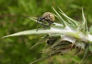 Garden bugs 39