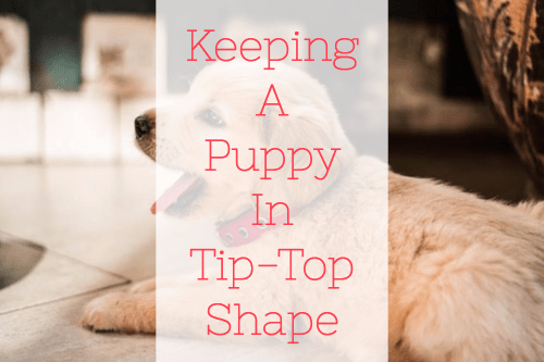 Keeping A Puppy In Tip-Top Shape