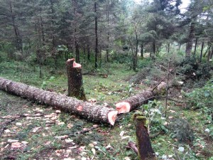 Remains of illegal logging