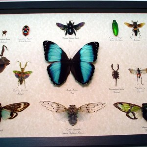 Insect-collection-set-real-framed-butterflies-and-insects
