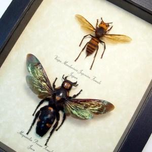 Murder Hornet Set Giant Hornets Wasp