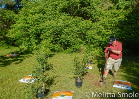 bgoss-planting-day-perkins-park-june-18-2016-image-by-kerry-jarvis-10