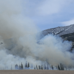 Smoke over trees-Controlled Burn