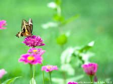 Butterflies Photo Gallery