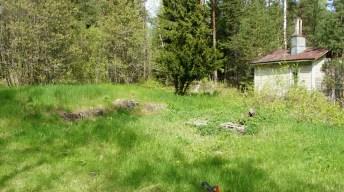 Location where eggs were found