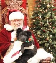 winnie and santa (2)