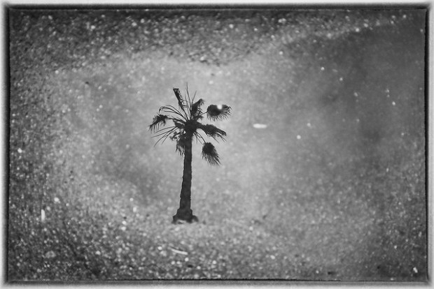 """The Elusive San Diego Rain Puddle Reflection"" image by Flickr user Patrick Merritt"