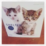 Photo of the Day: Day 3 of #12daysswap continues with a tribute to Shelter Cats! (Percy & Ned approve of this message.)