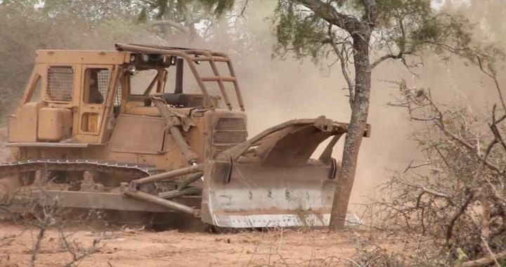 Desmontes, malnutrición y olvido a las comunidades del Chaco Salteño