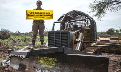 El país de los bosques arrasados: Tras las denuncias de Greenpeace, Chaco derogó permisos de desmonte
