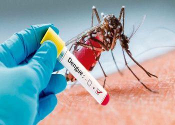 Revolucionario: Descubren una bacteria que reduce los contagios de dengue