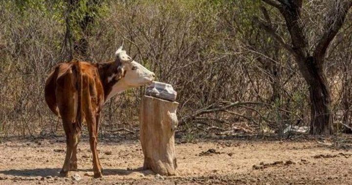 Fiscalía Federal donará forraje decomisado para productores ganaderos