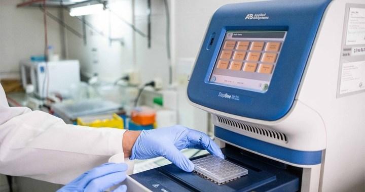 Descubren el rol clave de una proteína en el desarrollo de la septicemia, que evitaría muertes