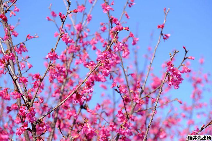 20210215000859 87 - 台中這間派出所旁有櫻花盛開中,瑞井派出所賞櫻秘境,櫻花好拍好入鏡~