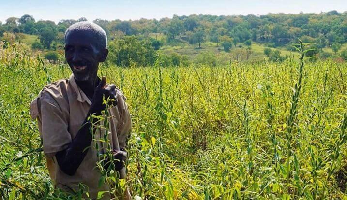tahini sesame farmer ethiopia compressed