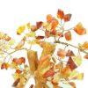 Brown Agate Crystal Gem Tree3