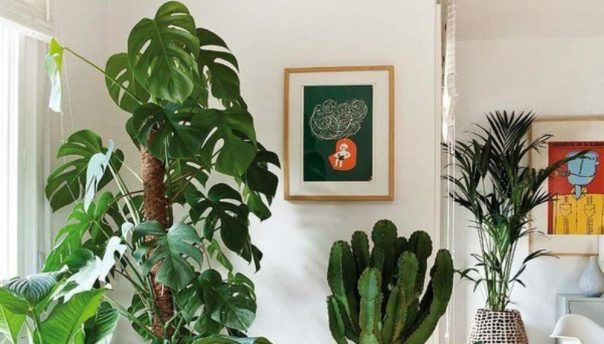 Plants as Feng Shui Cures Tips