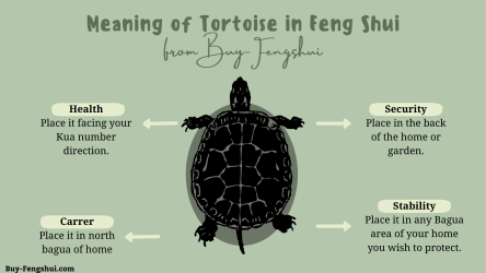 Meaning of the tortoise