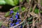 Tom D Welsh Colorado Hummingbird