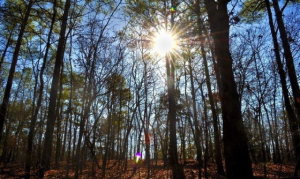 2.42 Acres For Sale- Build your Dream Home Here!
