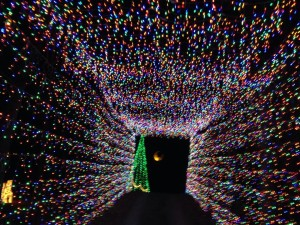 Driving through one of the light tunnels at the Christmas Land of Lights! (personal photo)