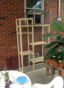 Seriously...Catios are real! A DIY Catio From Jim.
