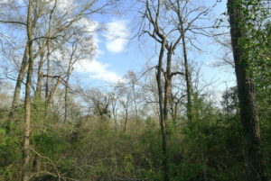 2 Acres For Sale on ACR 2207- Great place to Build!