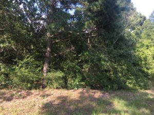 3.6 Acres For Sale on ACR 2405 in Montalba TX- Land for Sale
