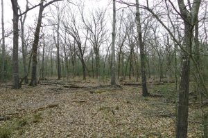 2 Acres For Sale on ACR 2207 in Palestine Texas