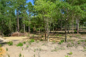 3.6 Acres For Sale on ACR 2405 in Montalba TX- Land for Sale 3.6 Acres For Sale on ACR 2405 in Montalba TX- Land for Sale *SOLD!* 3.6 Acre heavily wooded lot nestled in the piney woods of Montalba, Texas. Approximately 15 minutes from Palestine. Little information is known about property, Buyer to verify utilities and possible deed restrictions. Location of sign is approximate--exact property lines to be determined by survey. No fence or gate. See anytime. Call or Text Lisa Priest, Broker/REALTOR at 903-948-3343 for more info! Directions: From Palestine, Take Hwy 19 to Montalba. Turn left at blinking light in Montalba onto FM 321. Go Approx. 2.5 miles and turn right on ACR 2405. Property is on the right, before you get to CR 2406. Look for sign in tree. Location of sign is approximate. 3.6 Acres For Sale on ACR 2405 in Montalba TX- Land for Sale 3.6 Acres For Sale on ACR 2405 in Montalba TX- Land for Sale 3.6 Acres For Sale on ACR 2405 in Montalba TX- Land for Sale 3.6 Acres For Sale on ACR 2405 in Montalba TX- Land for Sale 3.6 Acres For Sale on ACR 2405 in Montalba TX- Land for Sale 3.6 Acres For Sale on ACR 2405 in Montalba TX- Land for Sale 3.6 Acres For Sale on ACR 2405 in Montalba TX- Land for Sale 3.6 Acres For Sale on ACR 2405 in Montalba TX- Land for Sale