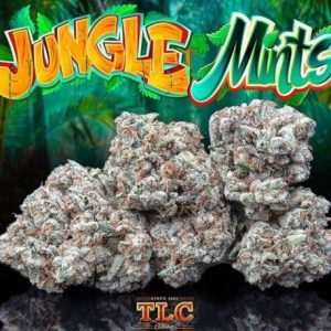 buy jungle boys in Europe buy jungle boys weed online UK, jungle boys for sale Canada, order jungle boys in Toronto, buy jungle mints strain