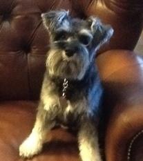 Dog - Zoey Barbara E