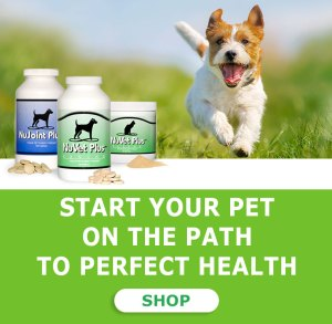 nuvet-pet-dogs-cats-supplemets-immune-support-phone19
