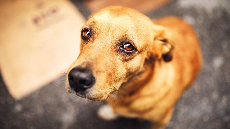 Hayvanları Koruma Kanunu'nda ilk yargılama