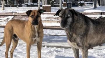 Bebek Parkı'nın kaçırılan köpekleri Nacho ve Bella için Ekrem İmamoğlu'na çağrı yapıldı