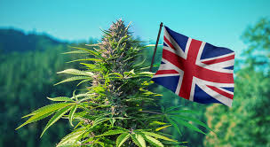 download 8 - THC WEED FOR SALE IN EUROPE
